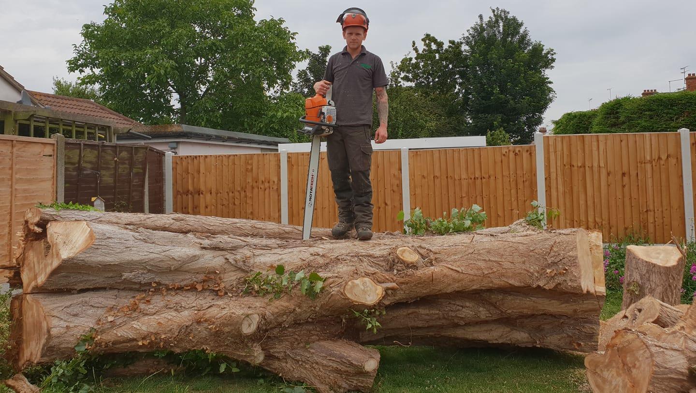 Welcome to Treemendous Tree Surgery