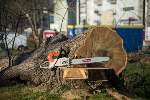 5 Reason Why You Should Get a Tree Stump Removed