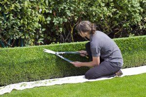 Why should I trim my hedges?